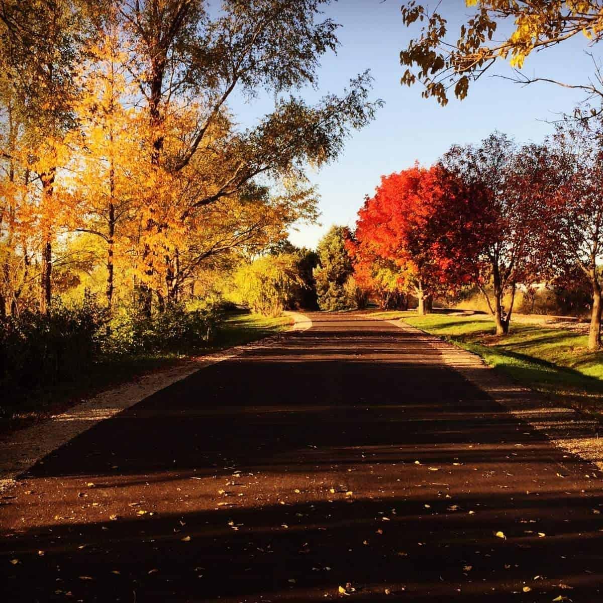 Cheap Fall Activities